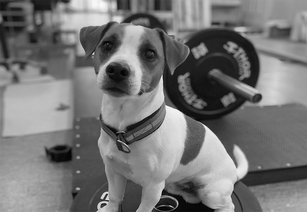 Gymhunden Gösta | Nylunds